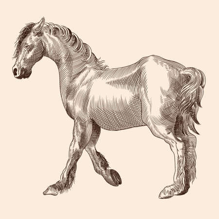 A thin horse without a saddle. Vector image of a medieval engraving on a beige background.