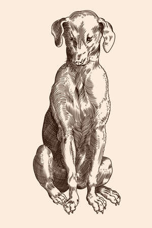 Hound breed dog is sitting. Vector image of a medieval engraving on a beige background. Ilustração