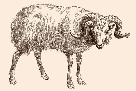 The mountain ram with large spiral horns. Vector image of a medieval engraving on a beige background.