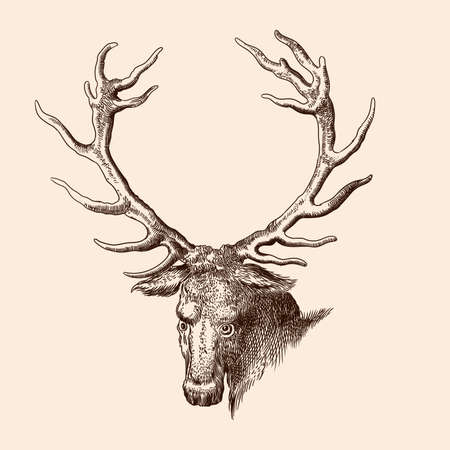 The head of a forest deer with large antlers. Vector image of a medieval engraving on a beige background. Ilustração