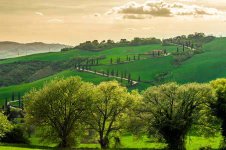 The Famous Winding Road With Cypresses In Val D Orcia