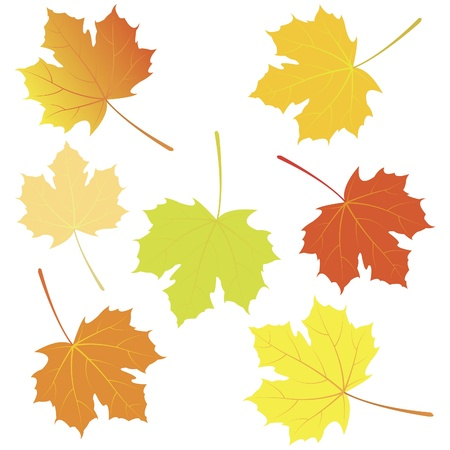 Autunno foglie d'acero Vettoriali