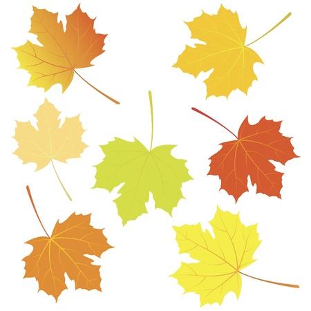 hojas de maple: Oto�o las hojas de arce Vectores
