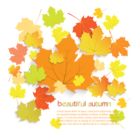 turn yellow: Autumn maple leaves with place for text isolated on white background.