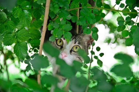 The hunting cat Stock Photo - 11177525