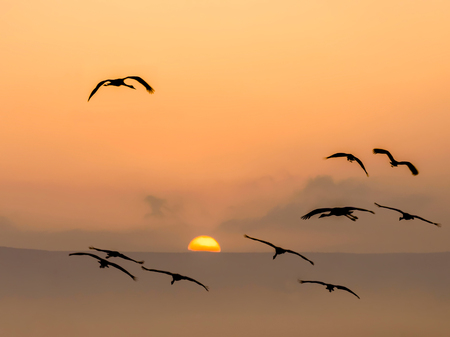 Cranes flying in the sky against rising sun. Beautiful orange sunrise.