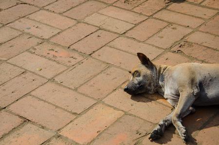 stray: Stray Dog sleeping on ground