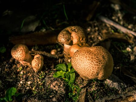mushroom detail on the ground with the focus centered on the first Stock fotó - 131946946