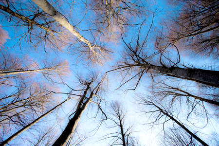 leafless trees seen from the ground with blue sky