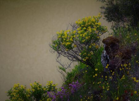 Beautiful corner full of colorful flowers and bushes on the shore of a lake. Its bright colors fill this hidden spot in the countryside with beauty.