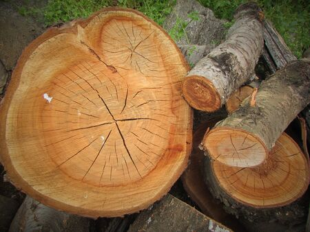 Natural wood logs. Firewood logs. Useful for decoration or firewood for fireplaces.