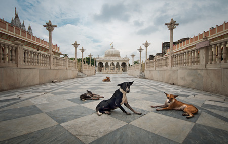 calcutta: Dogs at the entrance of a Jainist Temple in Kolkata, India
