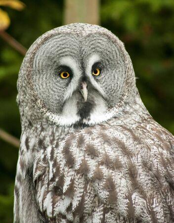 owl looking at the camera