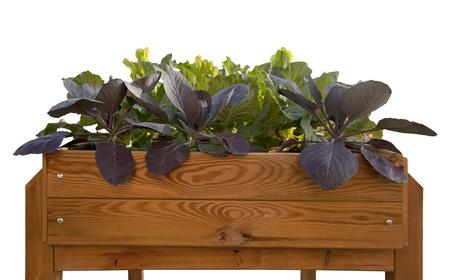 Garden growing vegetables in domestics