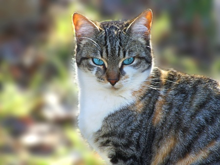Domestic cat looking at the camera still   Stock Photo
