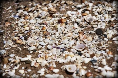 Conchas de mar sobre la orilla del mar Foto de archivo - 14755183