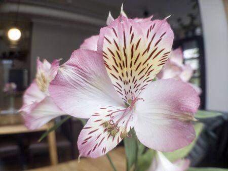 White flower with pollen
