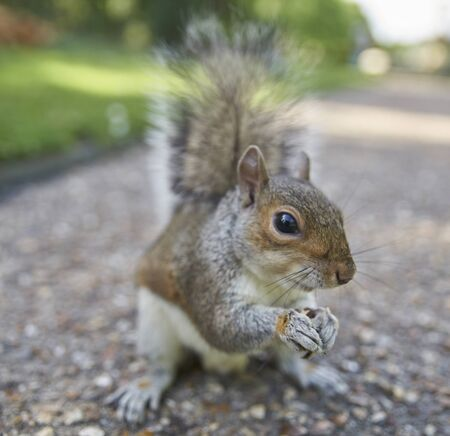 Waking in the park find a squirrel and feed him