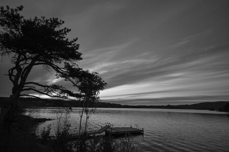Black and white dawn on the lake with the tree in the photo