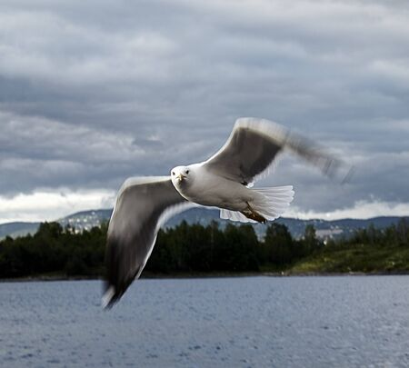 Seabird flying on the sea with the mountains at the back
