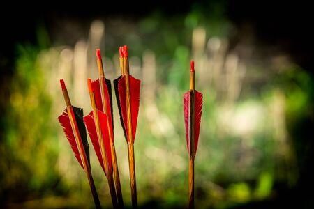 Red archery arrows on a green background with a beautiful bokeh, Romania Zdjęcie Seryjne