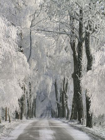 Snow Road. Please visit my gallery for more landscape and artistic pictures