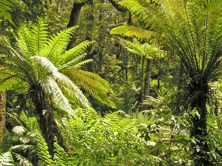 Australia tropical forest with fern tree photo