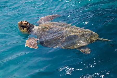 holiday destination: Loggerhead Sea Turtle swimming in the blue water near Zakynthos island - summer holiday destination in Greece Stock Photo