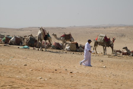 HURGHADA, EGYPT - JUNE 6: We take a closer look at the camels in Sahara Desert, Egypt, on June 6, 2008. Here beduins wait for tourists to take a camel ride so that they can earn some money for their families. Stock Photo - 8149935