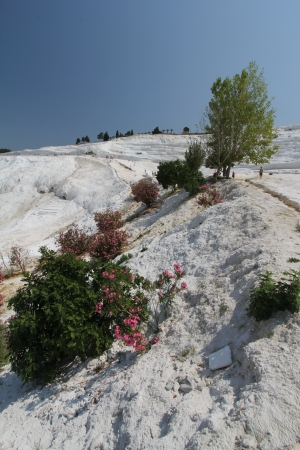 Pamukkale - terraces of carbonate minerals left by the flowing water photo