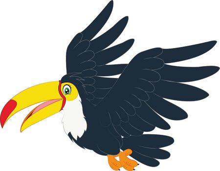 Hornbill bird cartoon