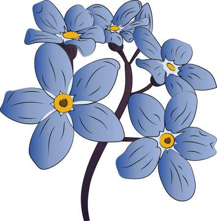 Vector illustration of cornflowers