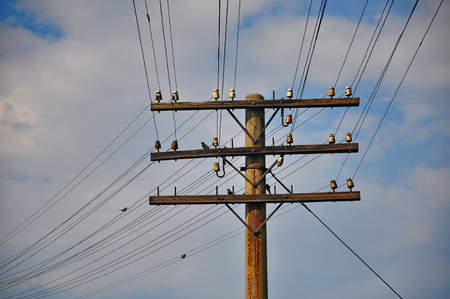 telegraaf: An old telegraph pole with some birds on it