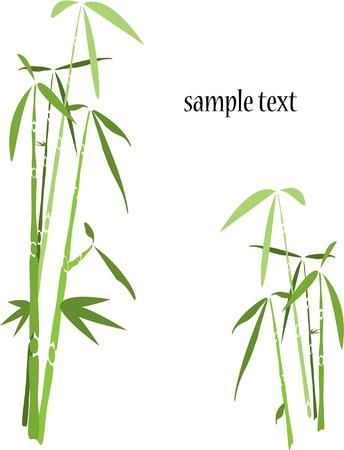 bamboo tree background on white Stock Illustratie