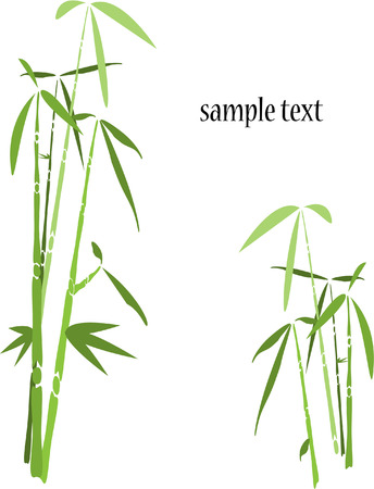 bamboo tree background on white Illustration