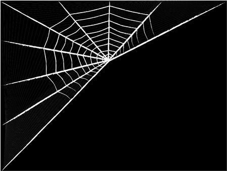 spider net: black spider net