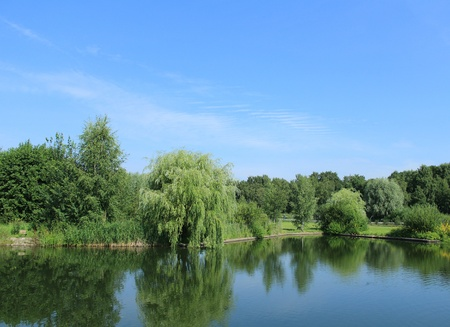 Landscape of lake and forest photo