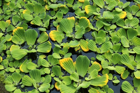 green plants on water photo