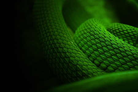 snake skin green nature background Stock Photo