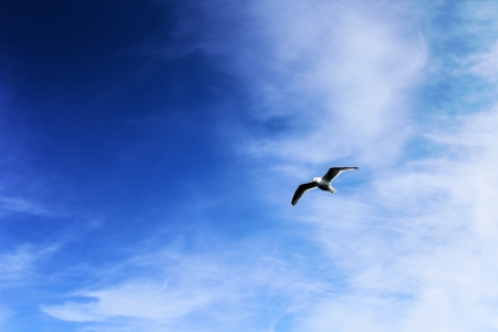 deep blue sky and seagull  Stock Photo - 14162771