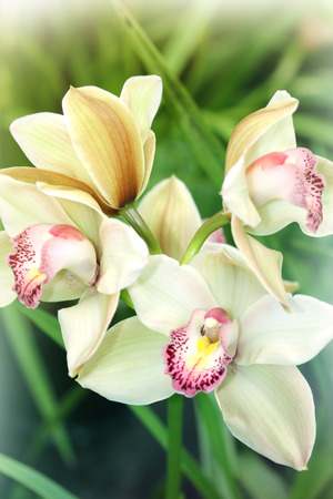 Beautiful Orchid brench