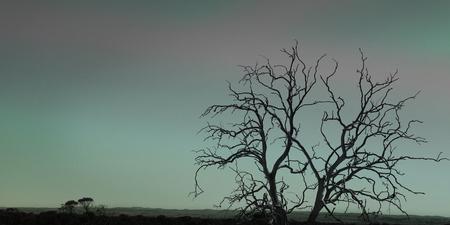 Dead tree at night