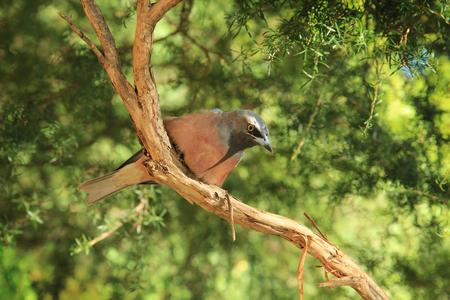 Wild bird in Park looking for food