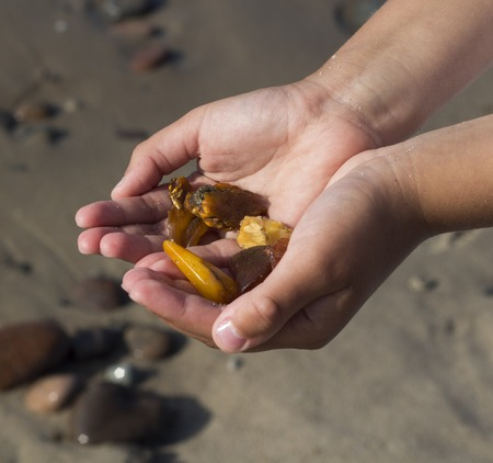 Some pieces of amber found on the Baltic seashore on hand close up cold sea in background