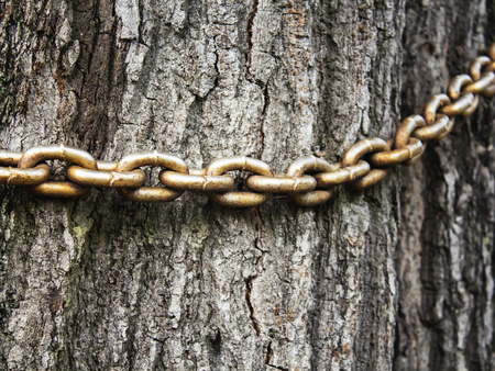 the old chain on the trunk of an old tree, close-up
