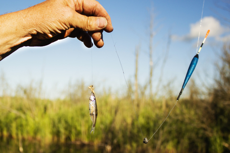 small fish placed on the hook as bait.