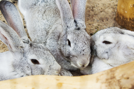 Grey rabbit sitting in a cage Stock Photo