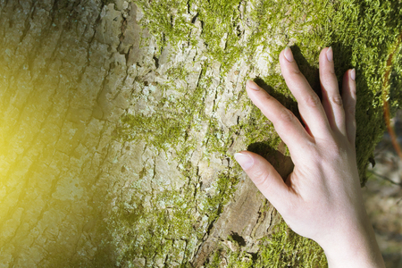 Women's hands hugging a tree. 스톡 콘텐츠 - 100194825
