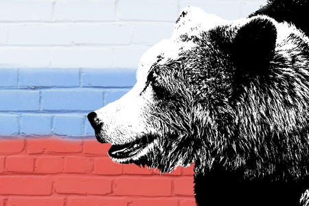 bear on the background of the Russian flag. brown bear