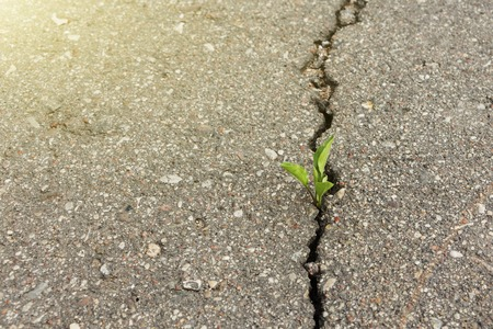 green plant growing from crack in asphalt. Imagens